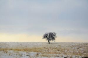 tree-289038_1280